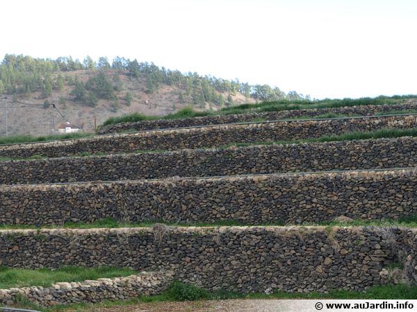 Des restanques dans le sud mise en place pour la culture de la pomme de terre