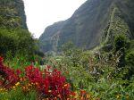Les réserves biologiques de l'ile de la Réunion