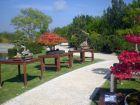 Les jardins du monde à Royan (17)