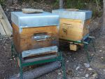 Reconnaître les maladies dans la ruche