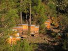Questions fréquentes sur l'abeille domestique