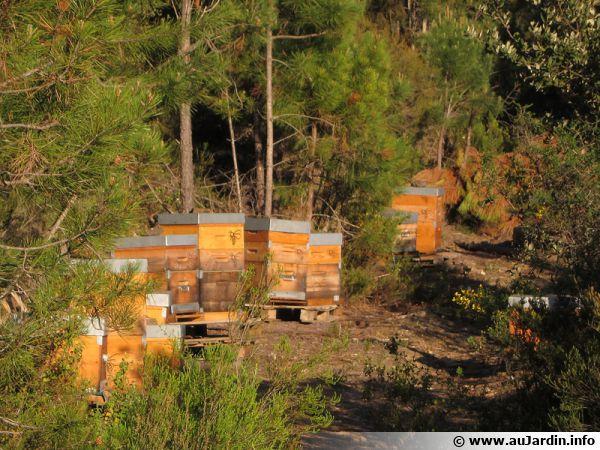 Des ruches hébergeant des abeilles domestiques dans les Maures