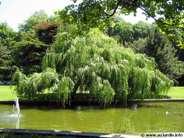 Arbres et arbustes croissance rapide for Arbustes de jardin