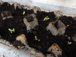 Des boîtes à œufs pour vos semis