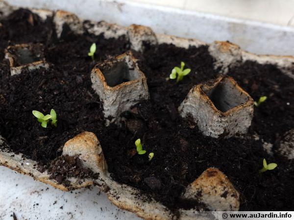 Des boîtes à œufs pour vos semis, facile !