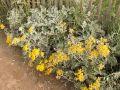 Les plantes pour sols sableux