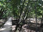 Les Seychelles, entre terre et mer, la mangrove est un lieu de biodiversité et de reproduction pour la vie marine