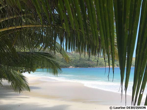 Les Seychelles, des plages paradisiaques mais aussi une faune et une flore unique préservée