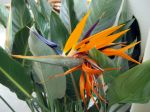 Un jardin méditerranéen dans la véranda froide