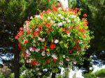 Créer une suspension fleurie