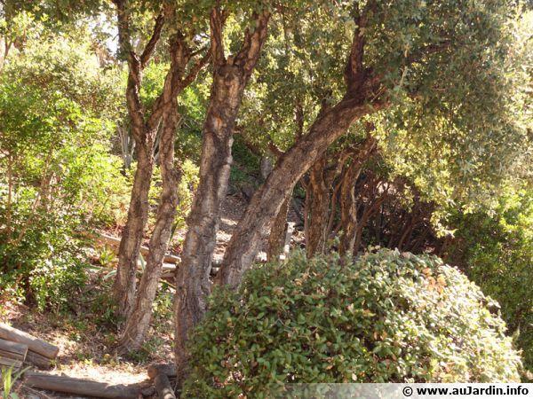 Dégagement du bas des arbustes pour donner de la profondeur au jardin