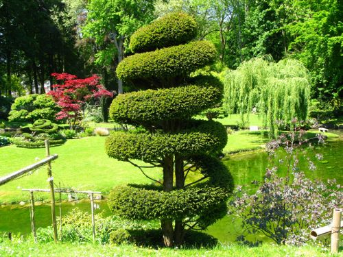 If commun taxus baccata conseils de culture for Arbre decoratif exterieur