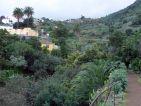Vue du parc de El Drago à Icod de Los Vinos sur l'île de Ténérife aux Canaries