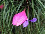 Bractée et fleur de Tillandsia cyanea, une fille de l'air