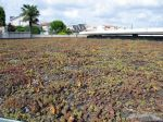Toiture végétale : un atout écologique pour les constructions durables
