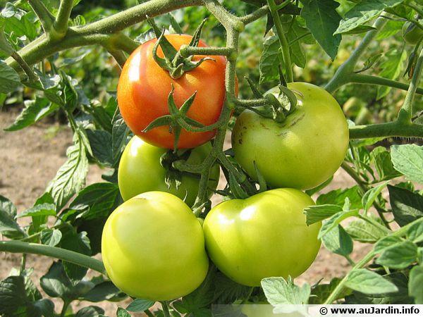 Caler les dates de semais et de repiquage au bon moment et bon endroit est important pour obtenir une bonne récolte