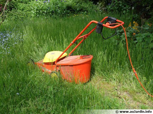 Que faire des résidus de tonte de gazon ?