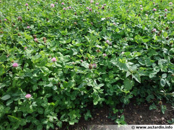 Des engrais au potager pour améliorer la structure du sol et le fertiliser