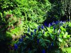 L'arboretum de Trompenburg en Hollande, vue 2