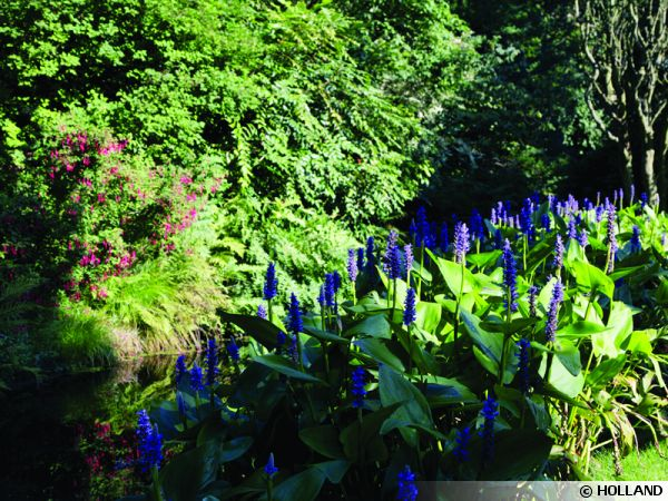 L'arboretum de Trompenburg en Hollande