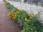 Des plantes sur mon trottoir