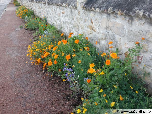 Des plantes sur mon trottoir for Plante pour bordure dallee