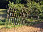 Tuteurer, plantes, arbres et arbustes