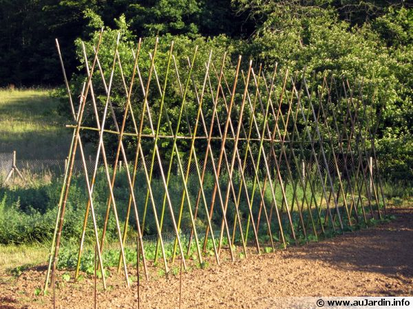 Tuteurer plantes arbres et arbustes - Tuteur tomate avec ficelle ...