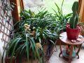 Quels soins apporter aux plantes dans la véranda en hiver ?