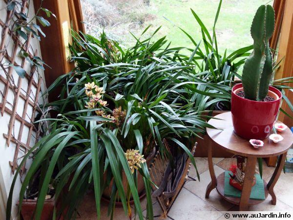 quels soins apporter aux plantes dans la v randa en hiver. Black Bedroom Furniture Sets. Home Design Ideas