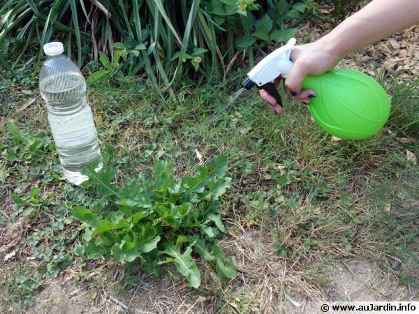 Le vinaigre blanc a plus d 39 un tour dans son sac - Comment se debarrasser des fourmis au jardin ...