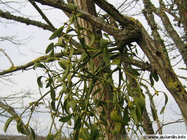 Un gui bien installé sur une branche