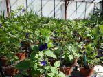 Protéger et hydrater les plantes vivaces persistantes en hiver