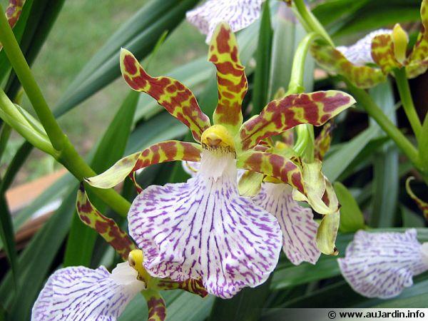 Les fleurs parfum es d 39 int rieur for Fushia plante interieur ou exterieur