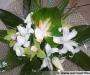 Juin, le bouquet