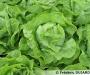 Des variétés régionales de légumes pour votre jardin