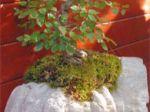 Olivier LOCATELLI, créateur de socles pour bonsaïs