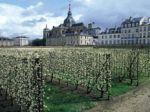 Le potager du roi à Versailles (78)