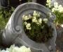 Creer un jardin urbain avec des bulbes de printemps