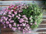 Composer de jolies jardinières - Quelques idées de composition