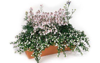 Feu d 39 artifice une jardini re clatante for Jardiniere d hiver
