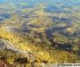 Les algues brunes pour un jardin 100% naturel