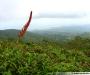 La Martinique (dossier)