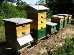 La ruche au fil des saisons