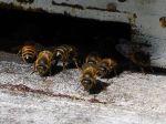 Dans la ruche, chacun son rôle