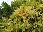 Utilisation des huiles essentielles au jardin