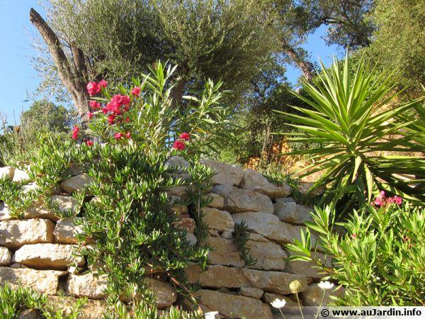 Laurier rose, olivier, yucca, des espèces résistantes à la sécheresse