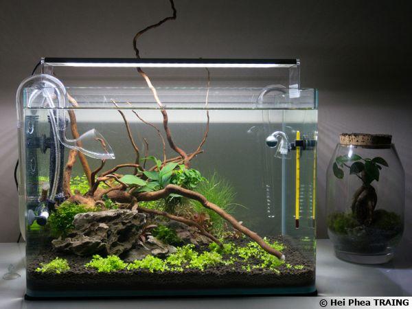 Petit aquarium abiritant quelques mollusques et surtout un décor naturel attirant le regard