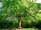 Les bonnes distances de plantation des arbres et des arbustes