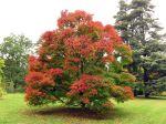 Pourquoi les feuilles tombent en automne ?